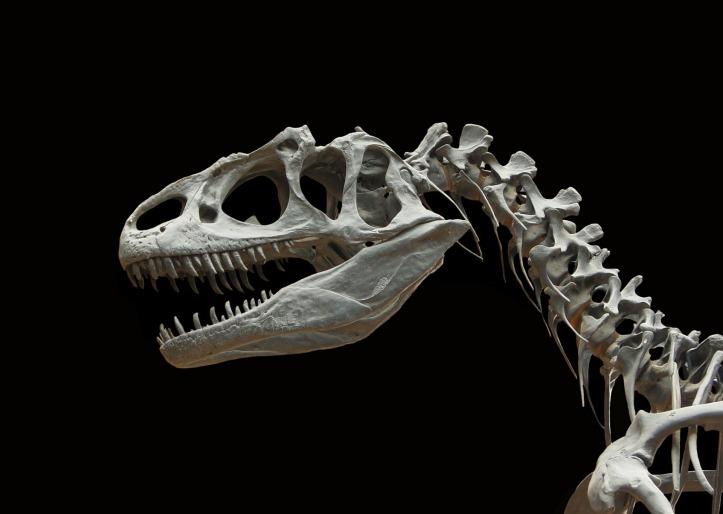 dinosaur-60588_1920