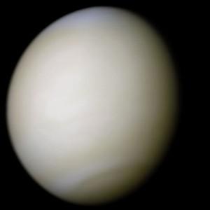 Venus presente